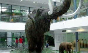 Mamute no museu Anthropos, em Brno.